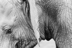 """Knjiga meseca: """"Putovanje jednog slona"""", Žoze Saramago"""